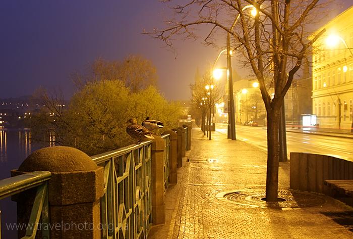 Фото, туман, утром, утки