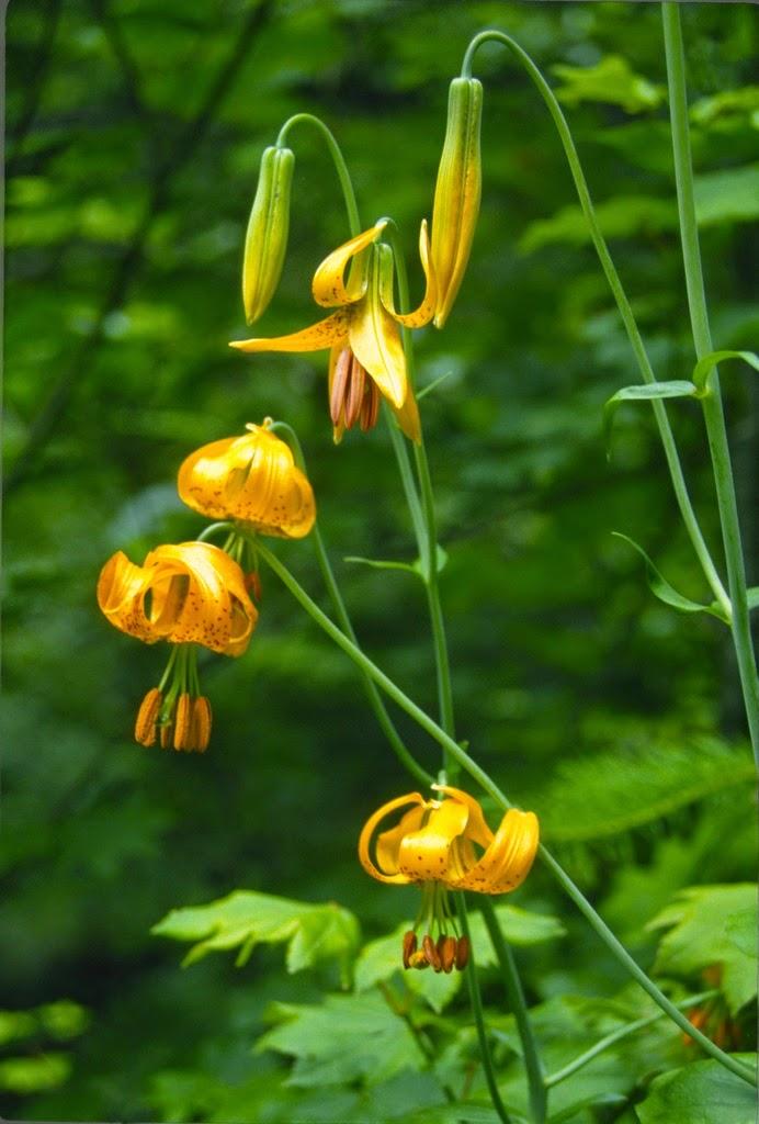 Flora Wonder Blog: Far Out Farm