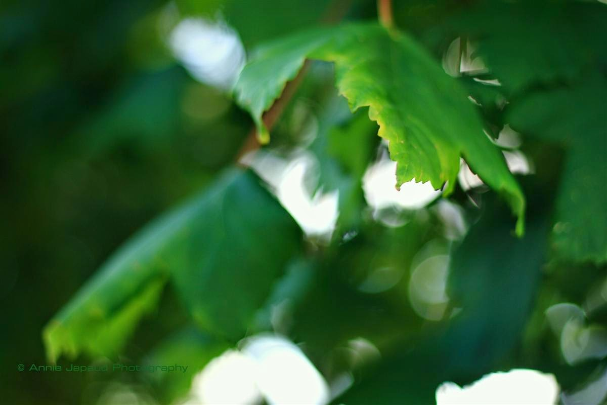 trees, leaves, green, nature, summer