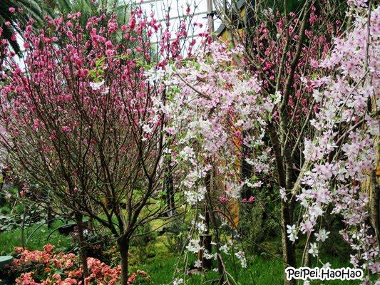 Garden By The Bay Blog peipei.haohao - singapore parenting / family blog: blossom beats