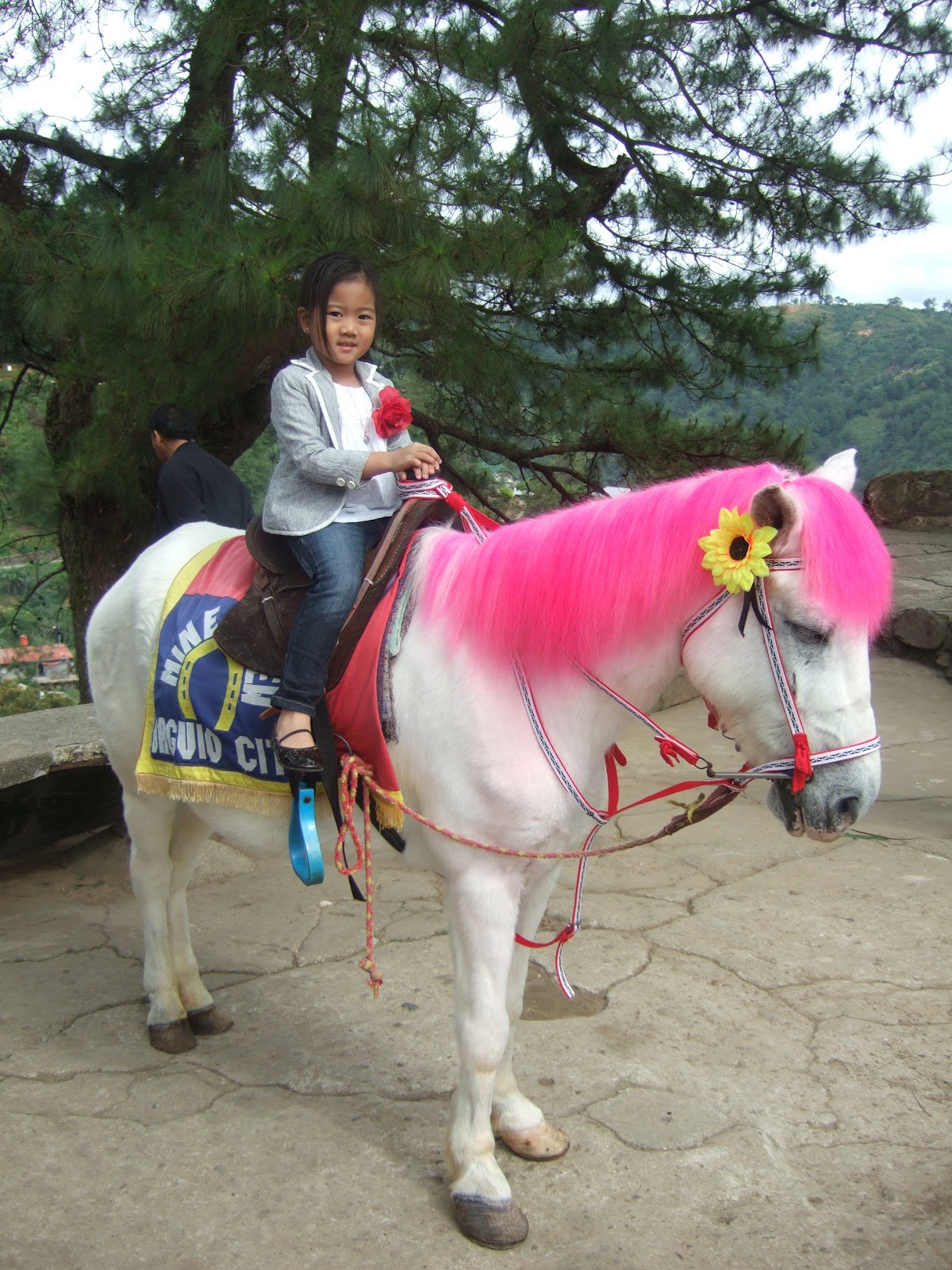 List Of Synonyms And Antonyms Of The Word Horses Dyed Hair