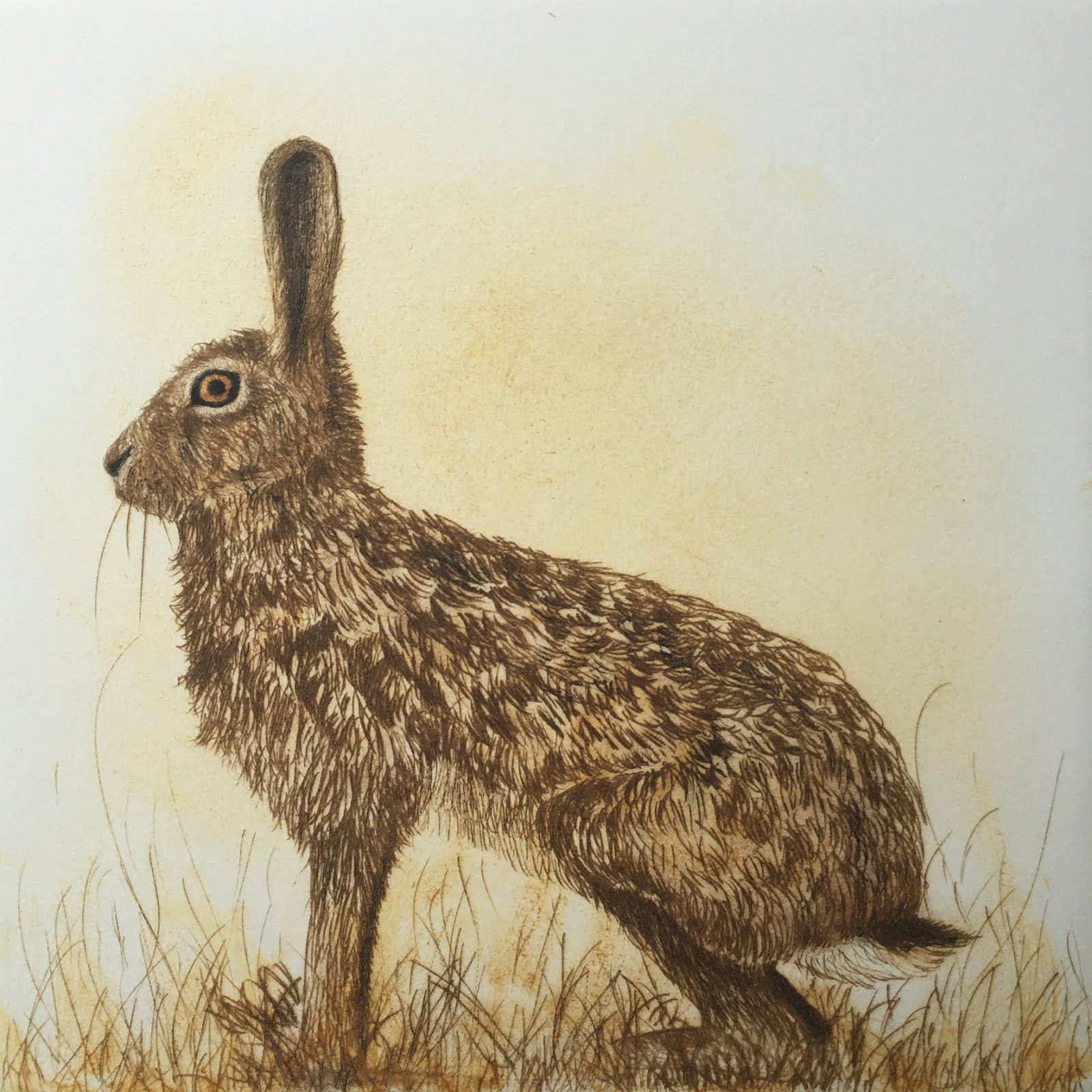The Watchful Hare.