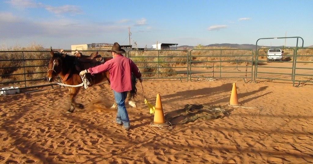 Functional Horsemanship Are Lunge Lines Dangerous