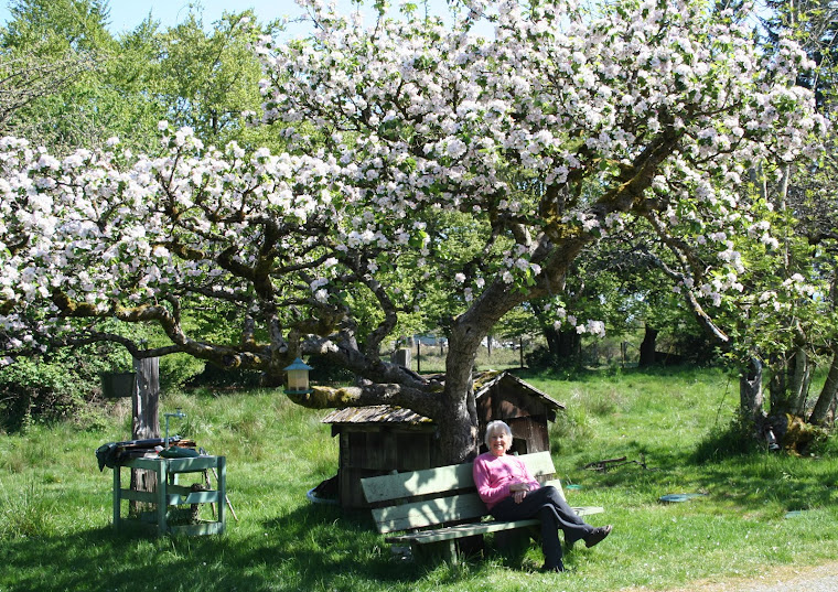 """""""DON'T SIT UNDER THE APPLE TREE......."""""""
