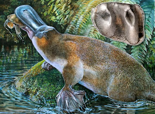 giant toothed platypus