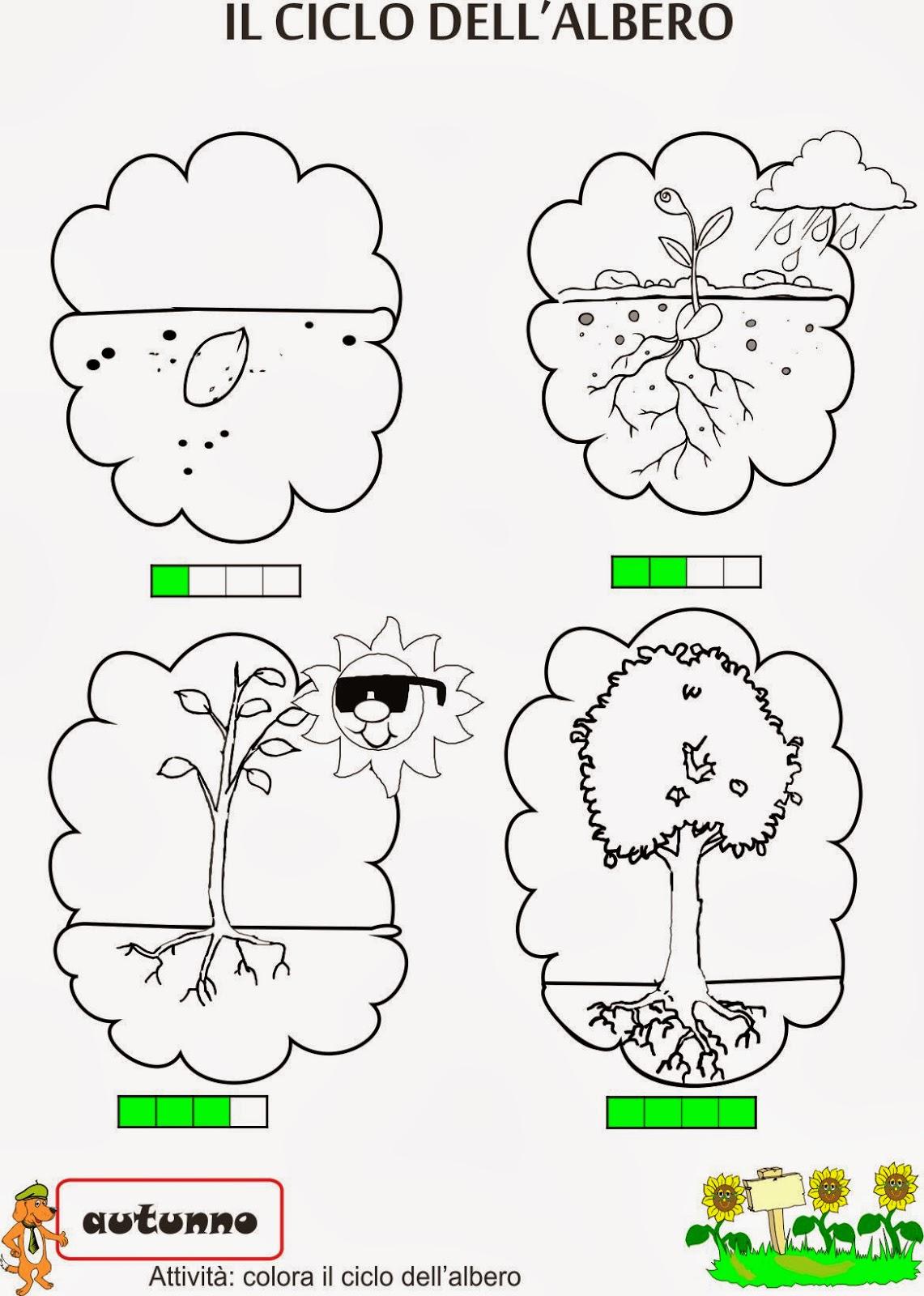 A scuola con poldo il nostro amico albero for Pianta con la c