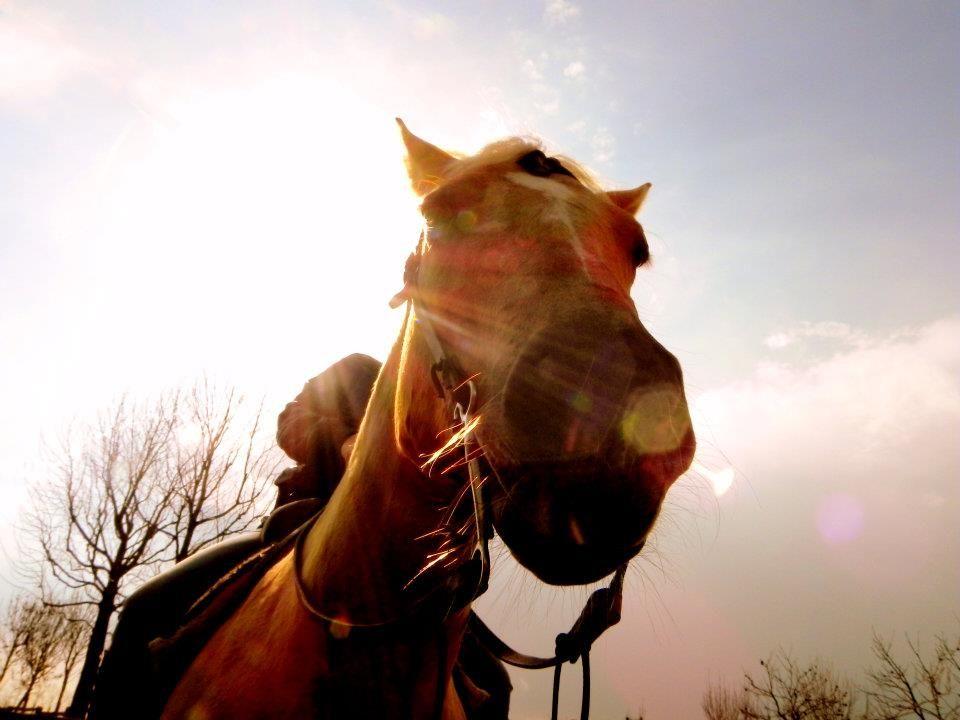 horses franciacorta