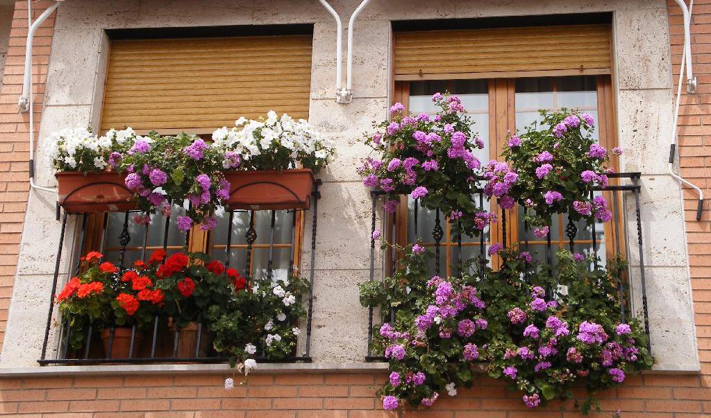 Jardineria fifi jardineras en balcones y ventanas for Jardineras para balcones