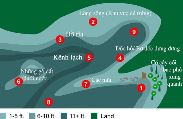 Những khu vực nước cá vược khổng lồ tập trung