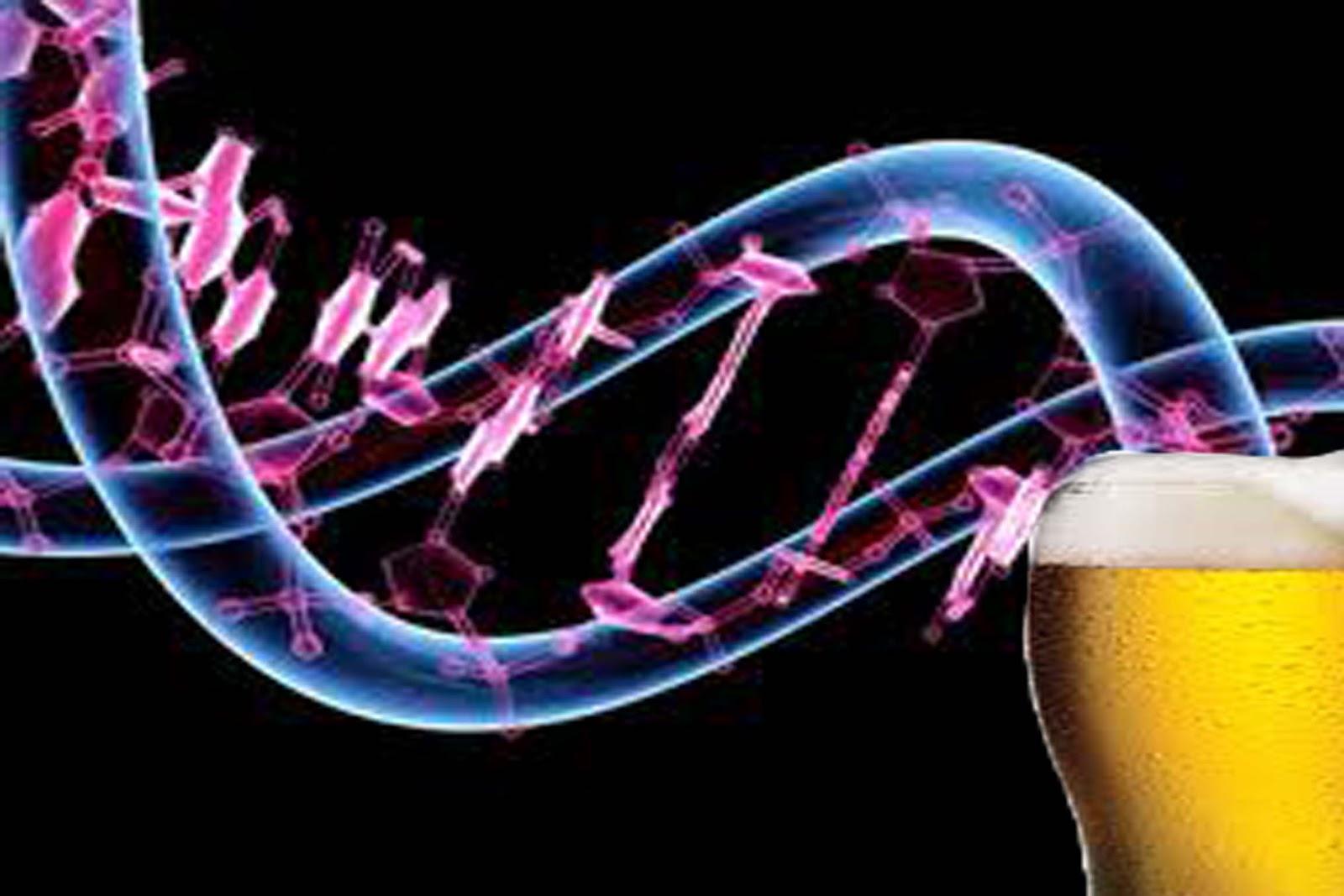genova de la cerveza