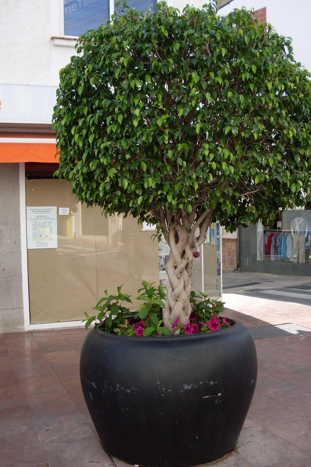 Jardin del mundo macetas y macetones for Plantas de exterior en maceta