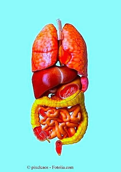Dorsopatiya di reparto cervicale e lombare di una spina dorsale