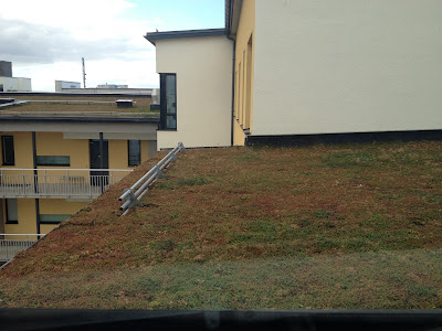 no maintenance green roof