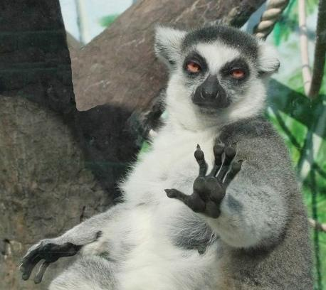 Funny pics funny sloth pics - Funny sloth pics ...
