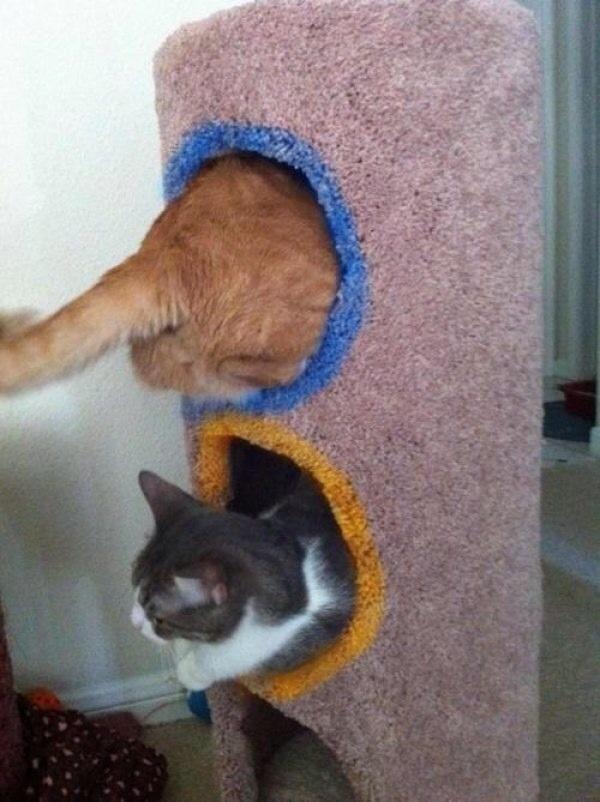 Сумасшедшие коты, фото 32