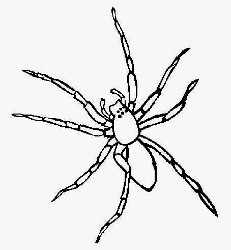 Spider Identification Chart further Halloween Coloring Pictures furthermore Halloween Clipart Borders besides Halloween Spider Coloring Pages To Print 8x11 Sketch Templates as well Handy spider identification chart. on scary baby spiders