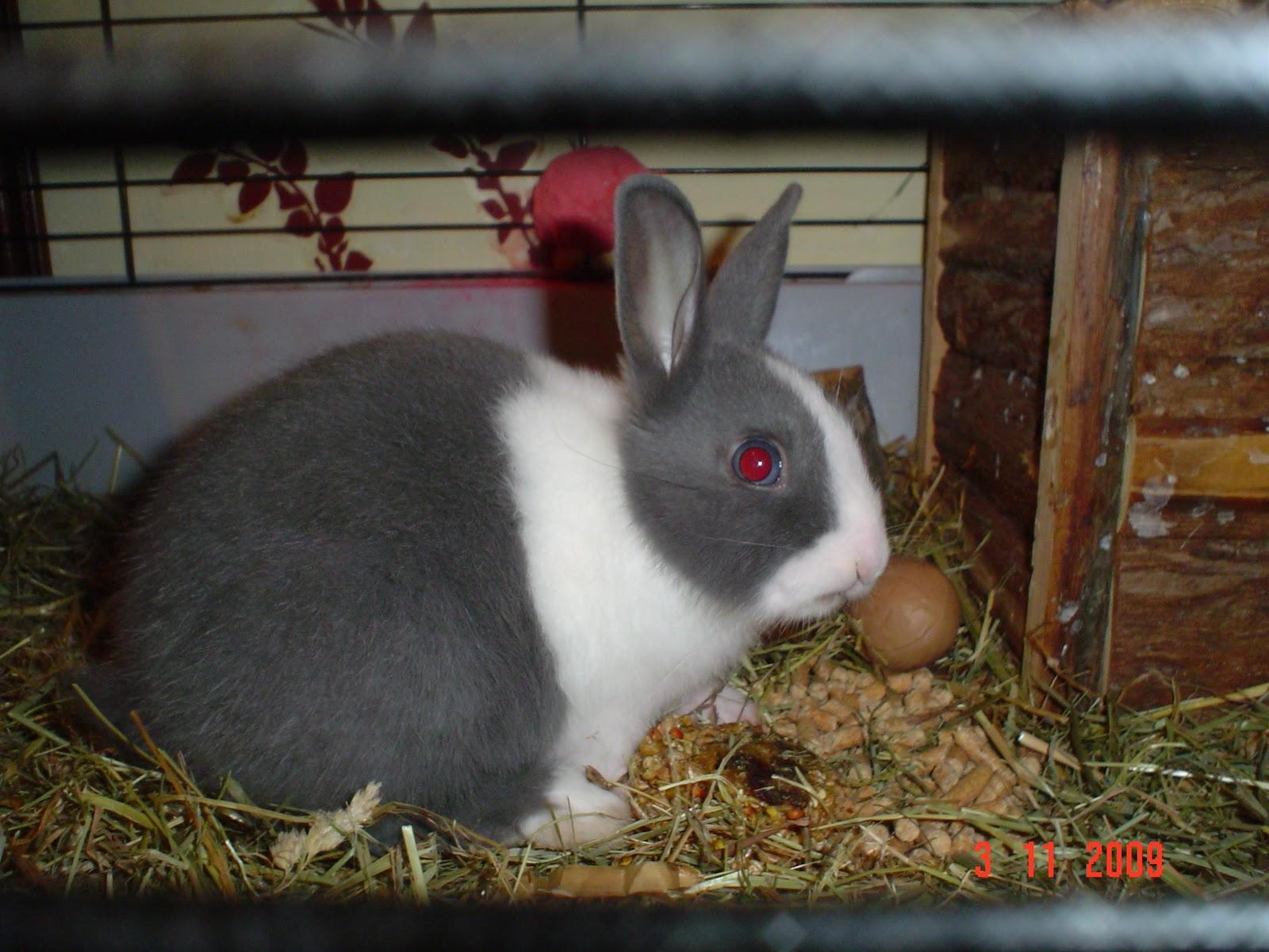 Conejos enanos su nuevo hogar - Casas para conejos enanos ...