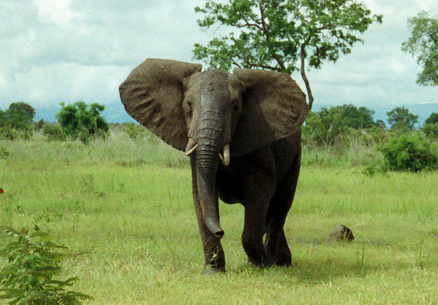 Elephant  The Biggest Animals Kingdom. Self Storage Pittsburgh Custom Control Asp Net. Accounting Software For Medium Sized Business. Professional Liabilty Insurance. Hotels World Trade Center Mortgage Houston Tx. Current Interest Rate On Saving Account. American Beauty Academy Wheaton. Secure Coding Practices Exchange Email Log In. Best Plastic Surgeons Las Vegas