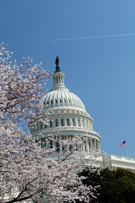 US Capitol Cherry Blossoms
