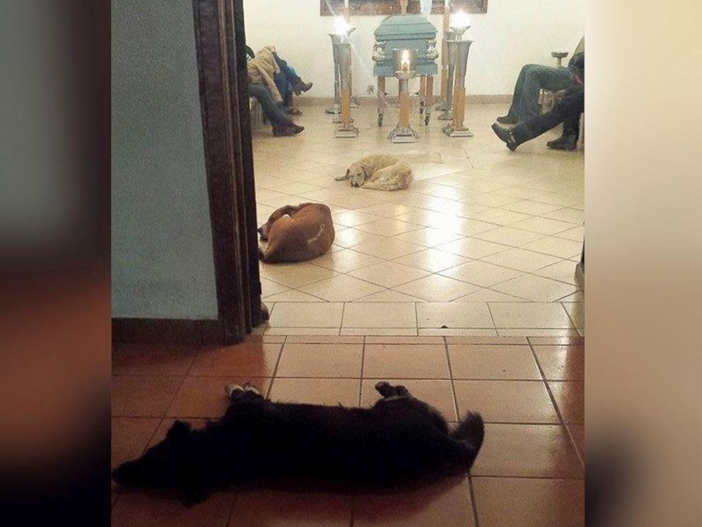ht_dogs_funeral_01_jc_150330_2_4x3_992.jpg