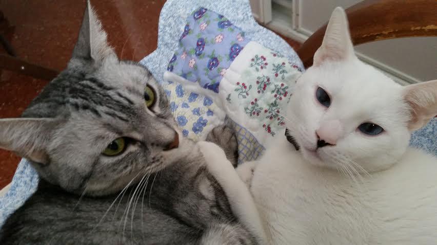 Mimo y Miska