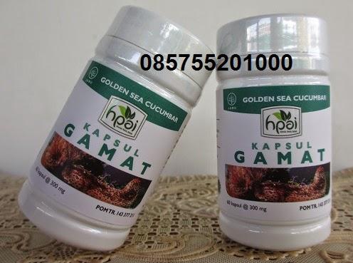 JUAL KAPSUL GAMAT HPAI | 085755201000 | Jual Kapsul Gamat Emas HPAI Surabaya Sidoarjo Jakarta
