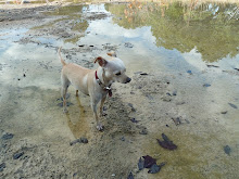 Chica takes a walk in the creek