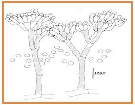 BIOLOGI GONZAGA: SOAL PEMANASAN UN 2011 L