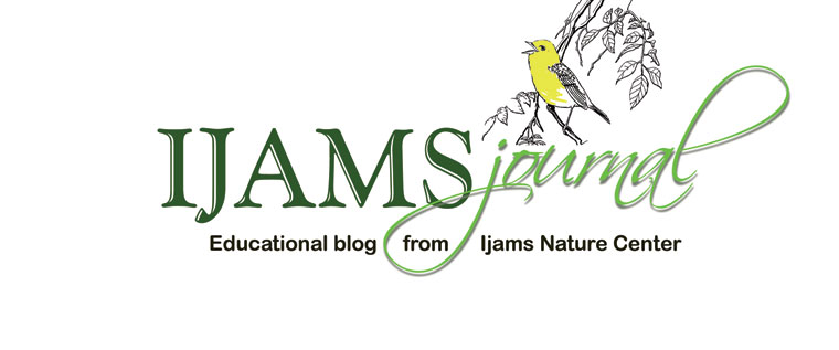 Ijams Journal