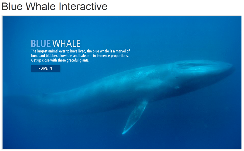 Tech Coach: Blue Whale Interactive