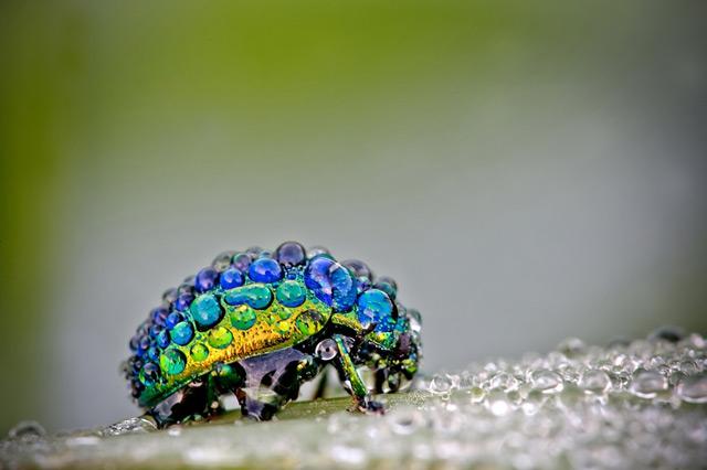 gotas de lluvia sobre insecto