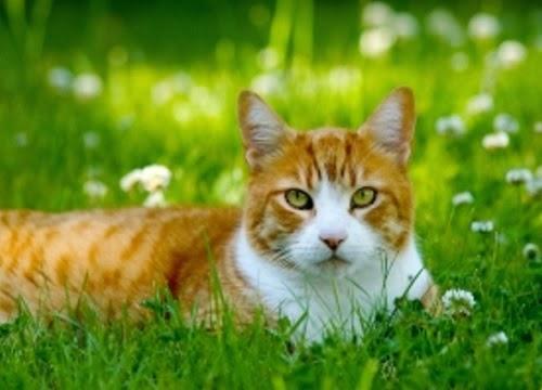 Kucing (koleksifotofoto.com)