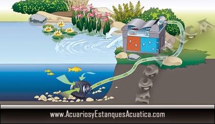 Tutoriales consejos acuarios y estanques acuatica for Filtros de agua para estanques de peces