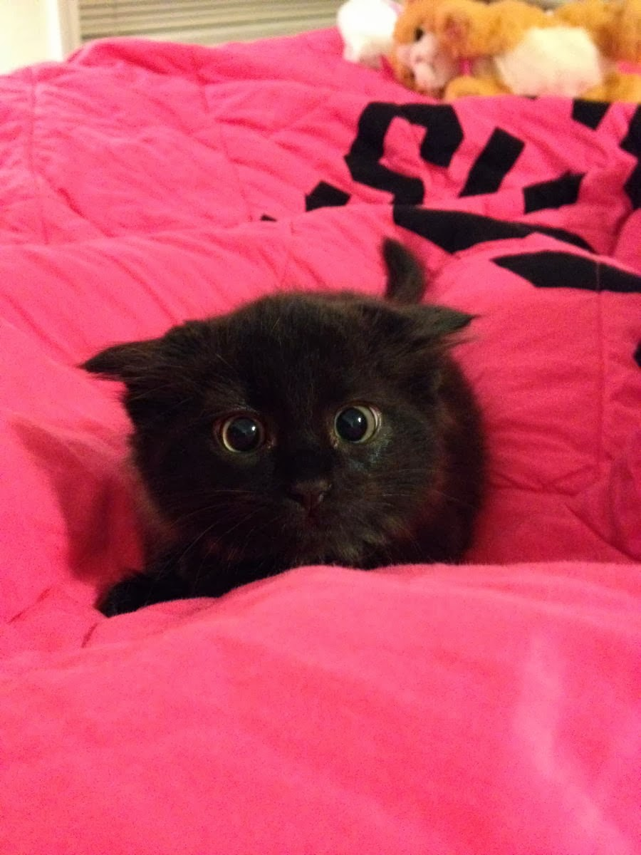 Funny cats - part 87 (40 pics + 10 gifs), little black kitten with big black eyes
