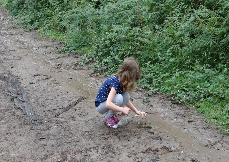 Planes con niños recoger moras