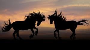 Cream Kuda Jantan | Terapi Perbesar dan  Perpanjang Penis | Obati Ejakulasi Dini