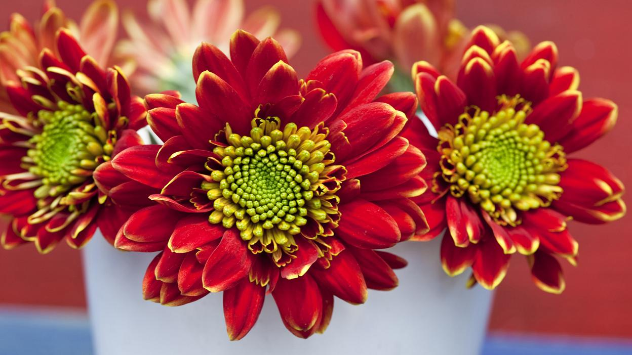 Download Wallpaper High Quality Flower - beautiful+high+quality+flowers  Picture_211569.jpg