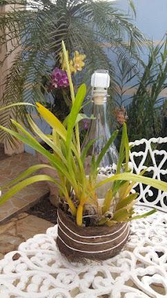Orquídea na garrafa de vidro.