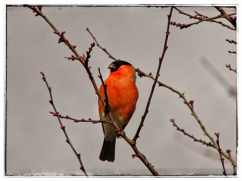 Ornitología: estudio y avistamiento de aves