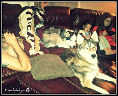 dogs on couches