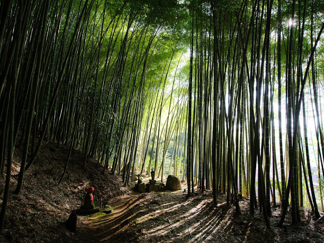 Bamboo Forest, Japan, wallpaper, green, shadow