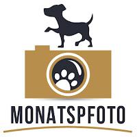 http://www.dunkelbunterhund.de/blog/fotoprojekt-monatspfoto/