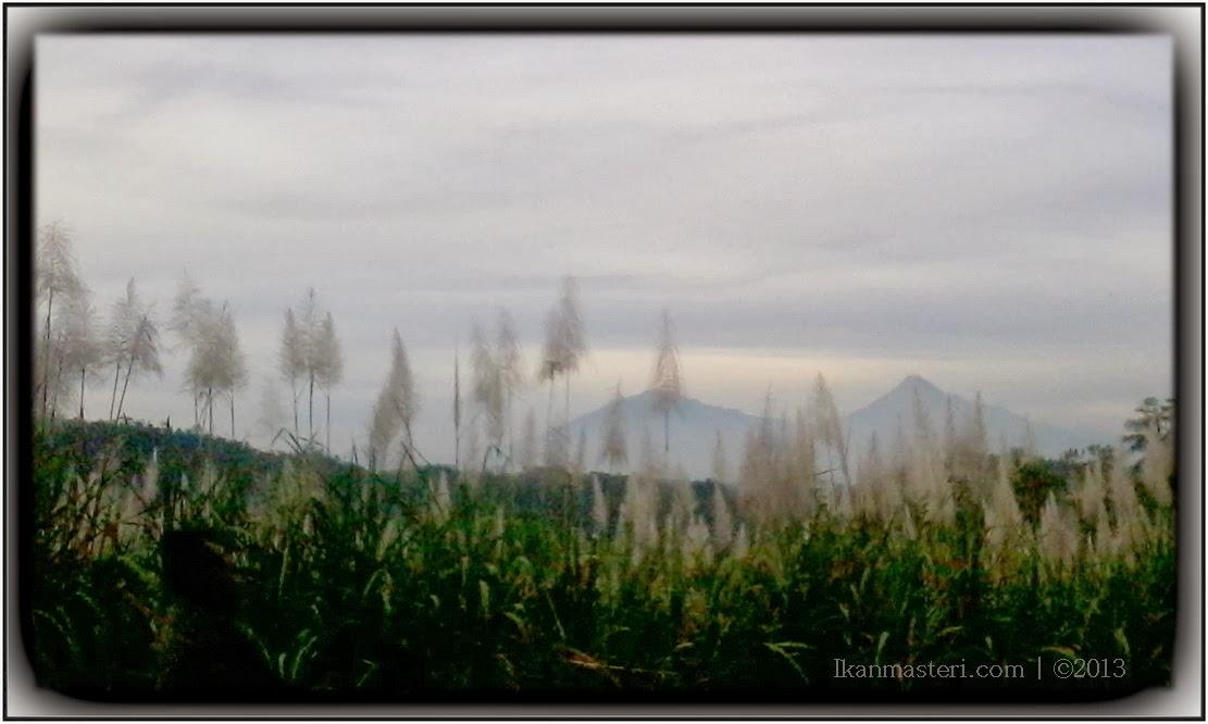 Tarian kembang tebu melihat cantiknya Merapi & Merbabu