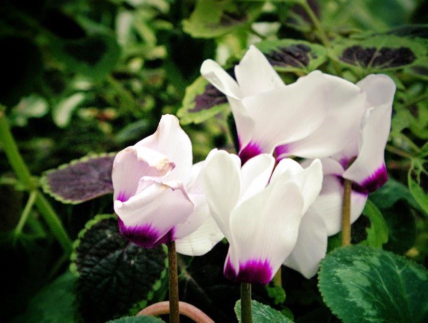 flori gradina botanica iasi