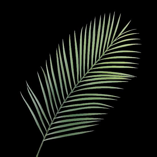 Scrap too simple mai 2014 for Feuille palmier artificiel
