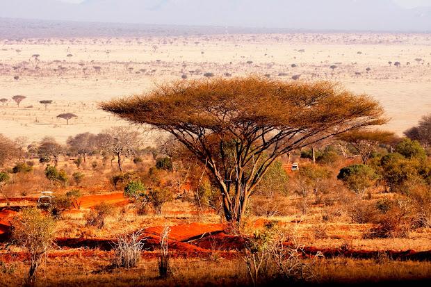 francesca riess african