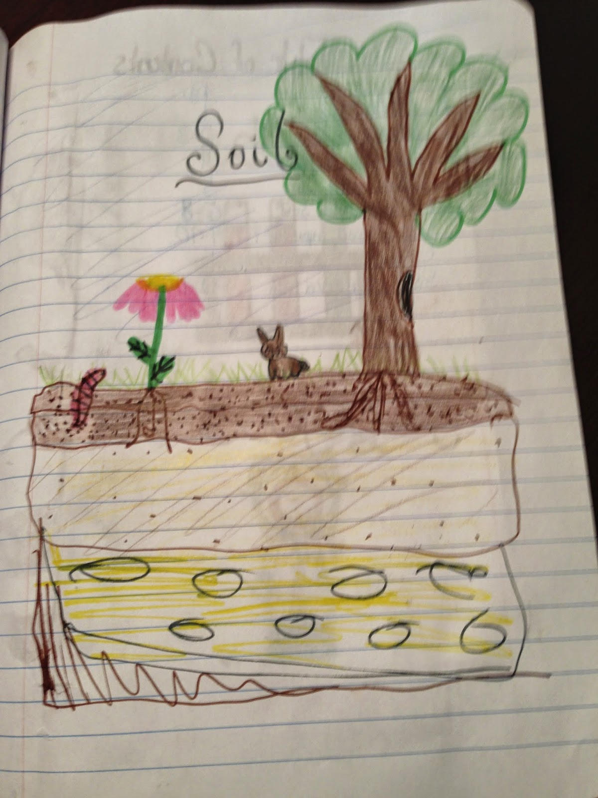 Glitter in third let 39 s talk about soil and interactive for Uses of soil for kids