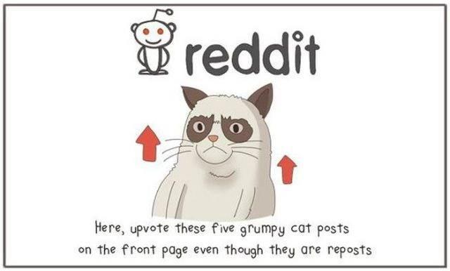 kartun-kucing-reddit