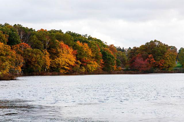 autumn foliage next to a pond