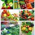 Cegah Kanker Dengan Sayuran